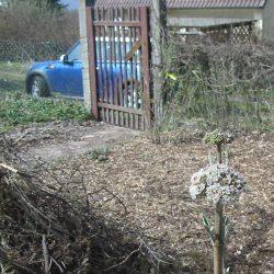 das alte morsche Gartentor