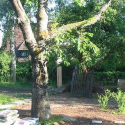 altes Tor am Apfelbaum