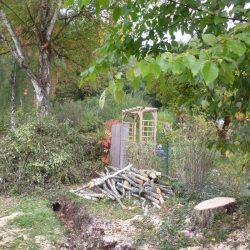 gefällte Birke, das Holz wird im Kamin von Nachbarn verheizt werden