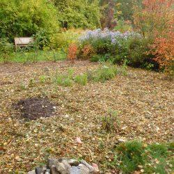 Birke als Mulch auf dem zukünftigen Gemüsebeet
