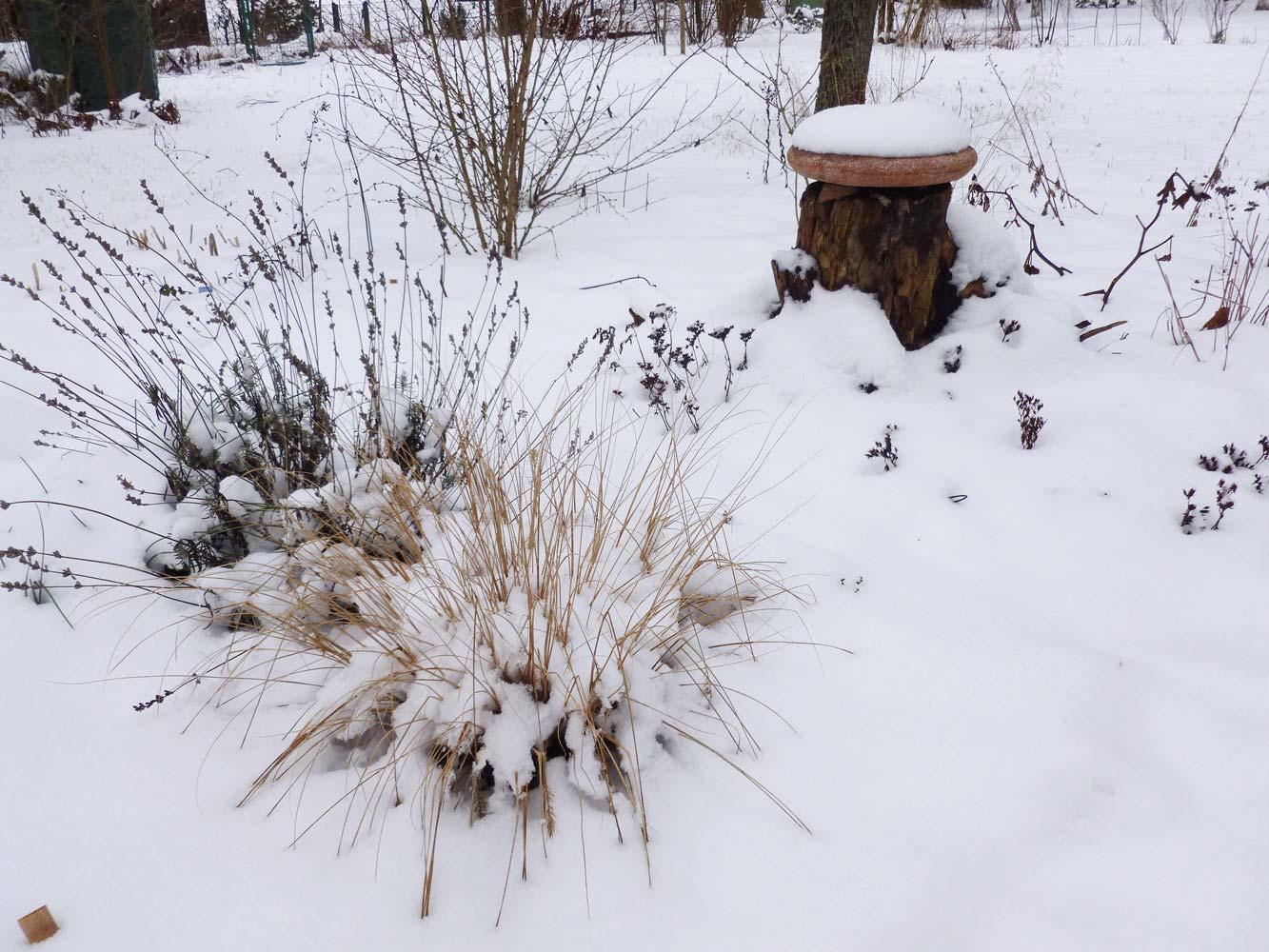 verschneiter Garten Anfang Februar 2015