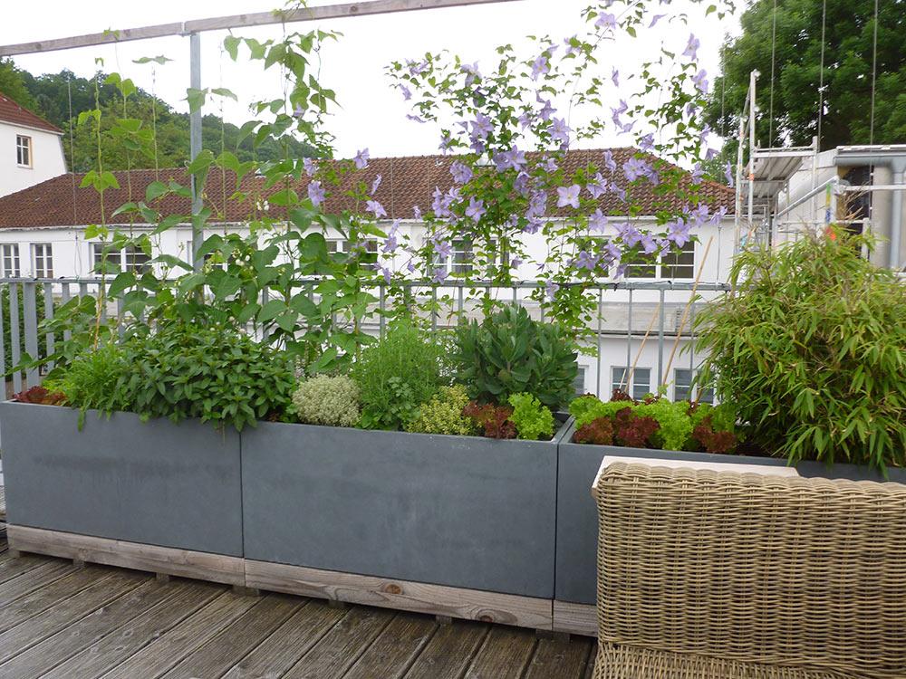 bohnen und minigurken auf der terrasse bg naturgarten. Black Bedroom Furniture Sets. Home Design Ideas