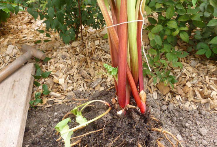 Anlage und Pflanzungen Hausgarten