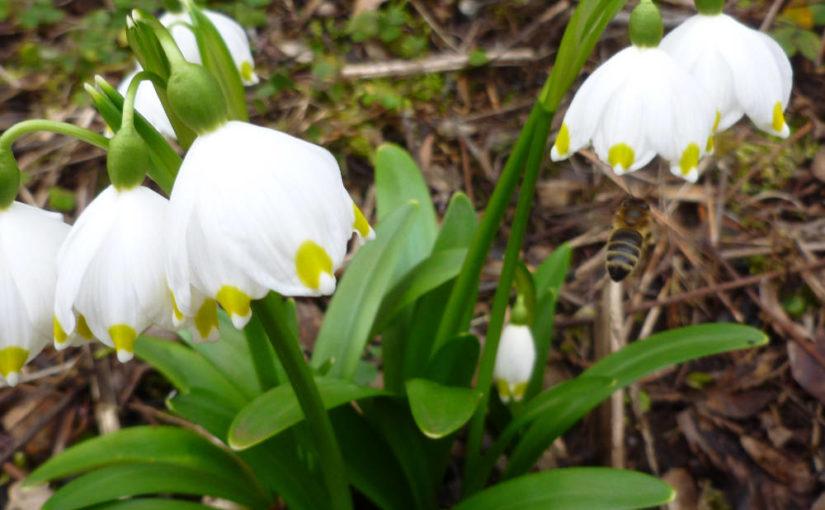 Blüten Mitte März