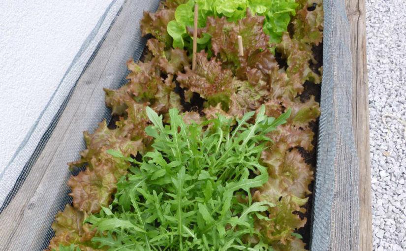 Niedriges Hochbeet für Salat und Kräuter