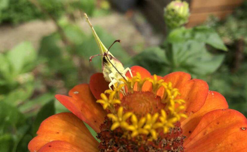 Insekten-Sommer